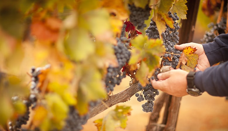 Guided Day Tour to the Côte de Nuits with wine tastings - from Beaune