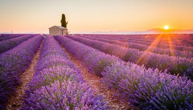 Le Meilleur De La Provence Avec Roussillon - au départ d'Avignon