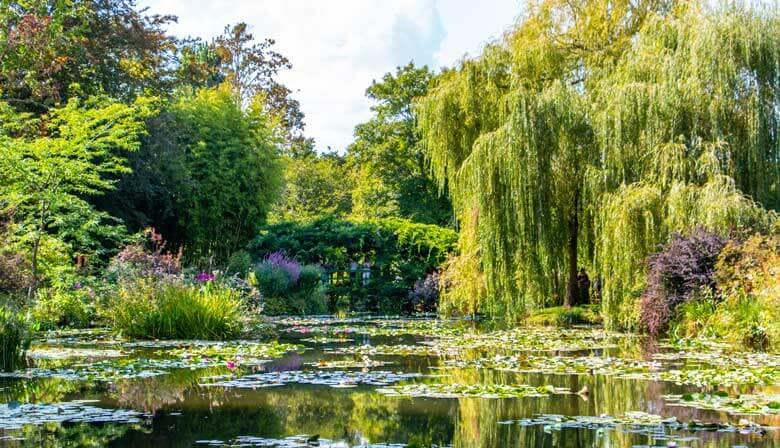Trees in the water garden of Giverny