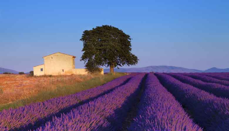 Colourful landscape of Provence