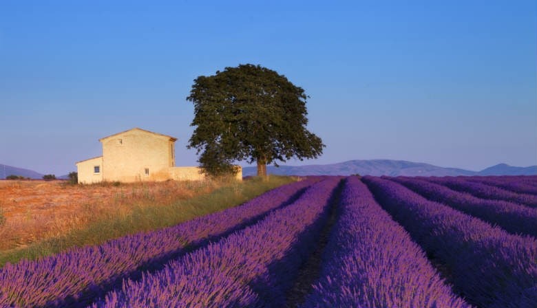熏衣草之旅: Luberon 贝隆山区—高速火车TGV巴黎出发