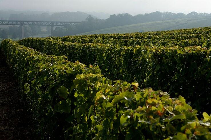 Vinos Del Loira Y Bodegas Del Valle Del Loira Pariscityvision