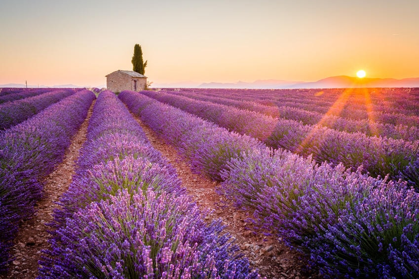 Image result for lavender fields provence""