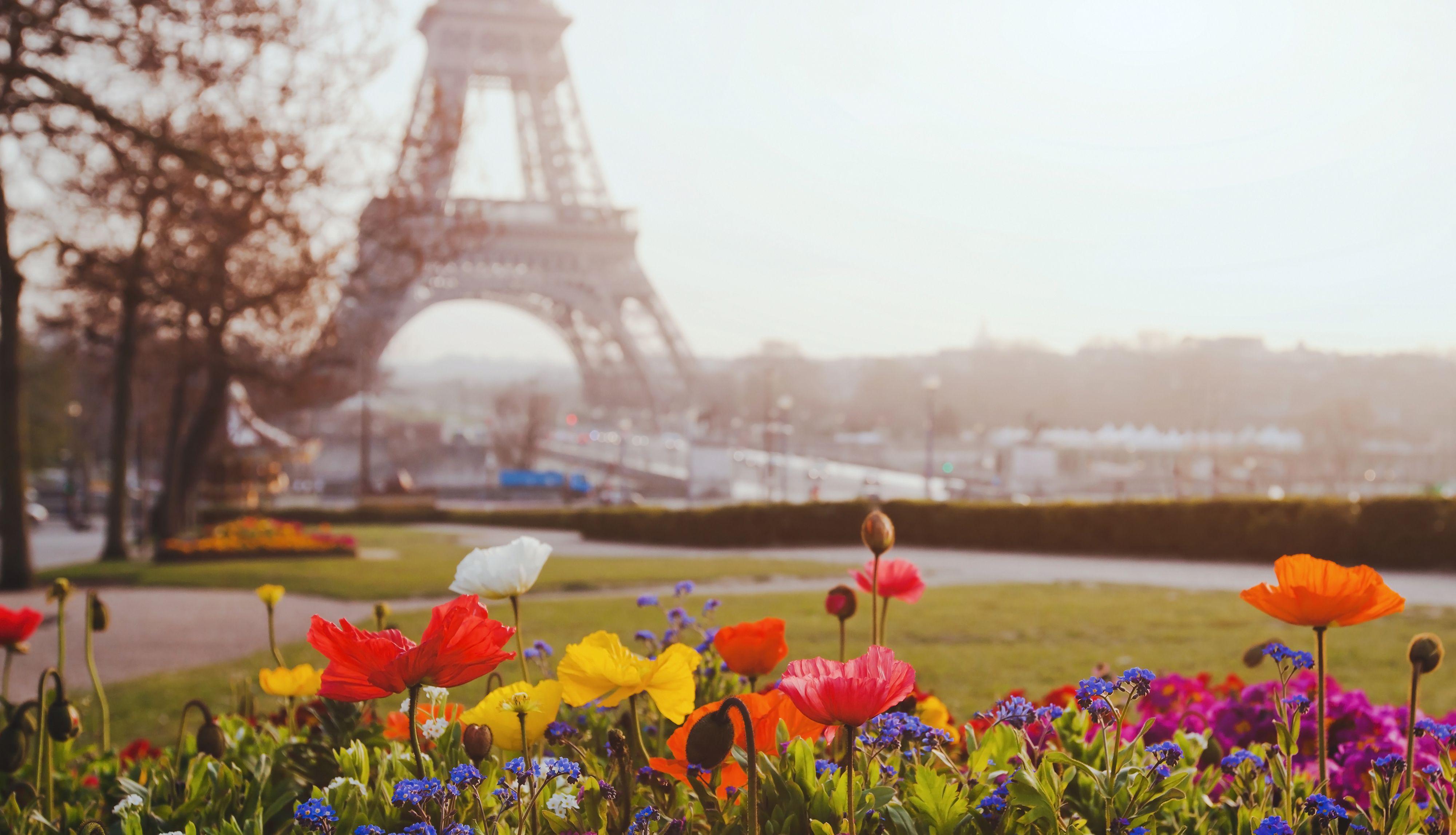 Flores da Torre Eiffel