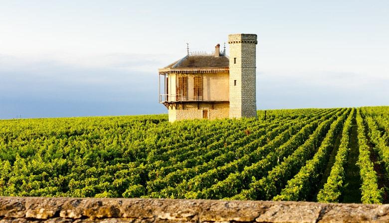 Burgundy Full Day Tour from Dijon: wineyards, tastings & visit of Beaune